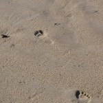 Footprints in sand by Robert Lawton